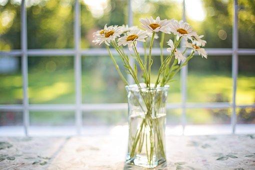 Daisies, Vase, Window, Floral, Bouquet