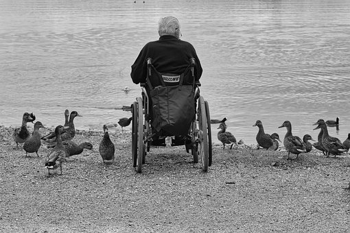 Man, Wheelchair, Ducks, Lake, Water