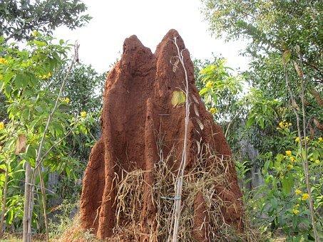Termite, Ant, Termite Hill, Ant Hill