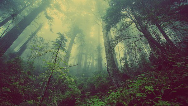 Forest, Mist, Nature, Trees, Mystic