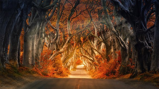 The Dark Hedges, Armoy, Ireland, Road