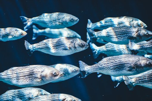 Fish, School, Swarm, Underwater, Animals