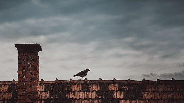 Roof, Bird, Chimney, Roofing, Roof Tiles