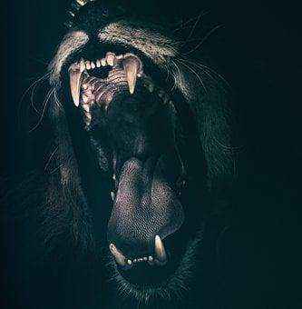 Lion, Teeth, Roar, Angry, Roaring